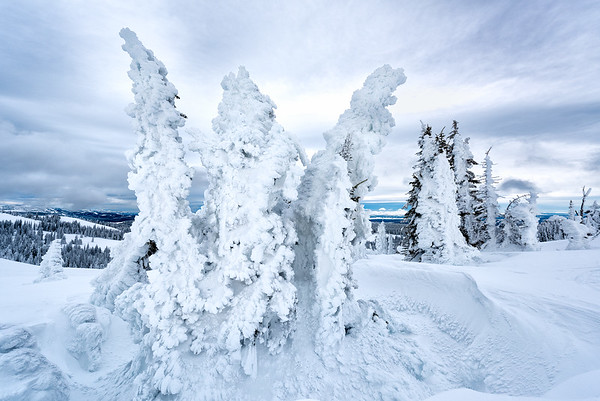 Standing tall, despite heavy snow jackets