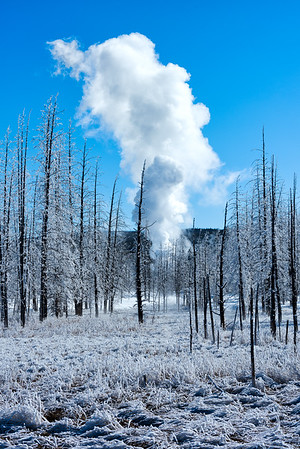 Geyser erupting in a frosted forest