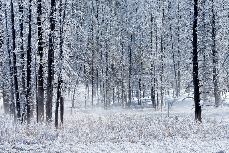 Frosted Forest with Thermal Activity