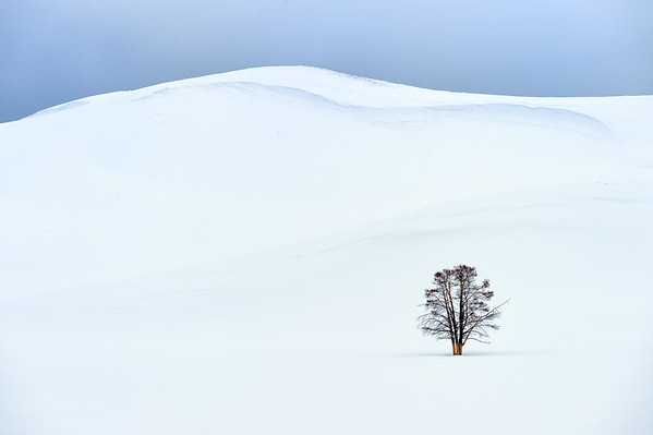 The simple beauty of Yellowstone in the winter