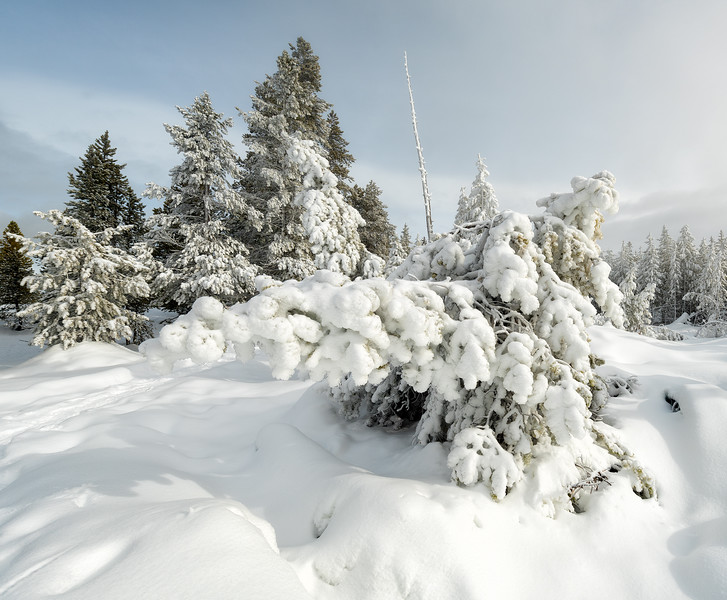 The power of too much snow