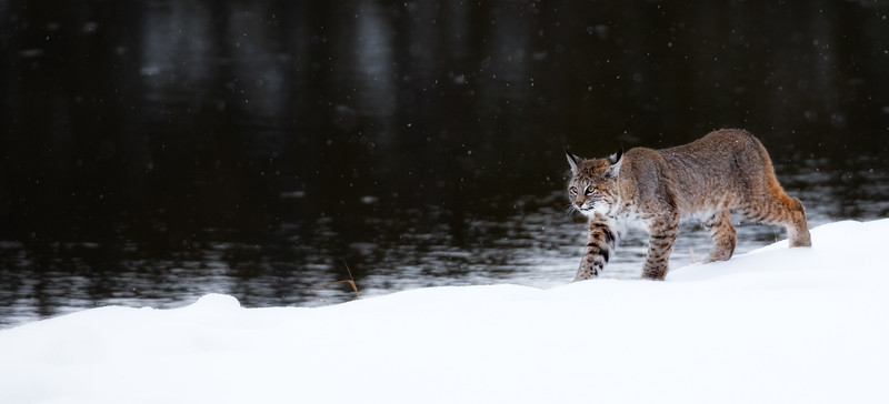 """""""On the Prowl"""""""