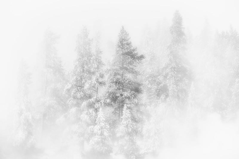 """""""Hidden Forest"""""""