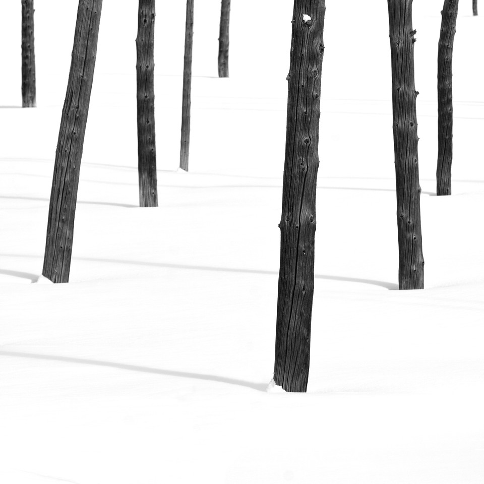 """""""Trees in Snow"""""""