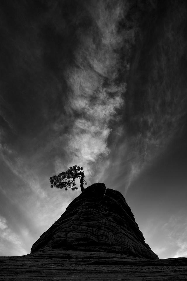 """Piñon Tree and Clouds"""