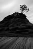 """""""Piñon Tree Long Exposure"""""""