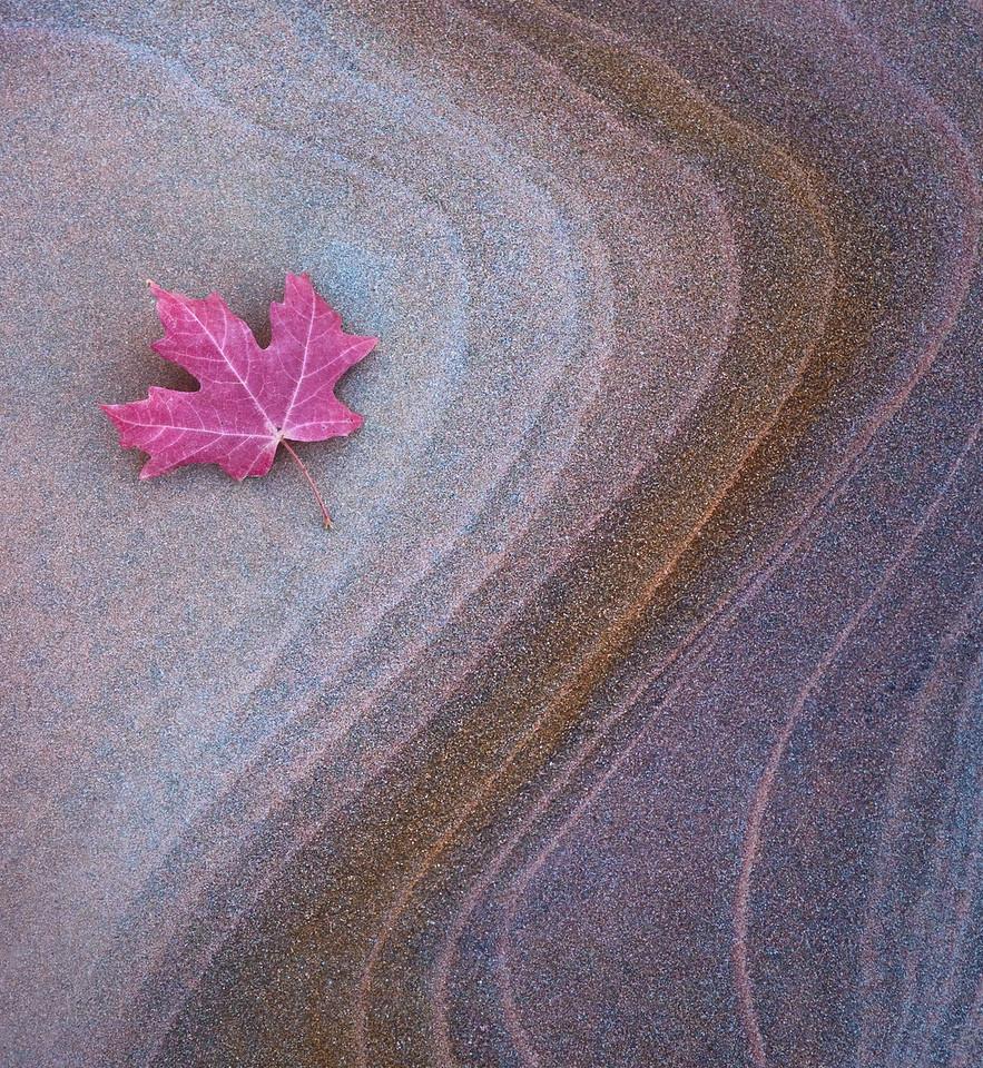 """Leaf on Sandstone"""