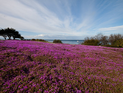 Wildflowers,  Pacific Grove, CA  Here I used a low perspective to give an impression of a vast expanse of flowers. The wide angle lens makes the clouds stand out impressively.