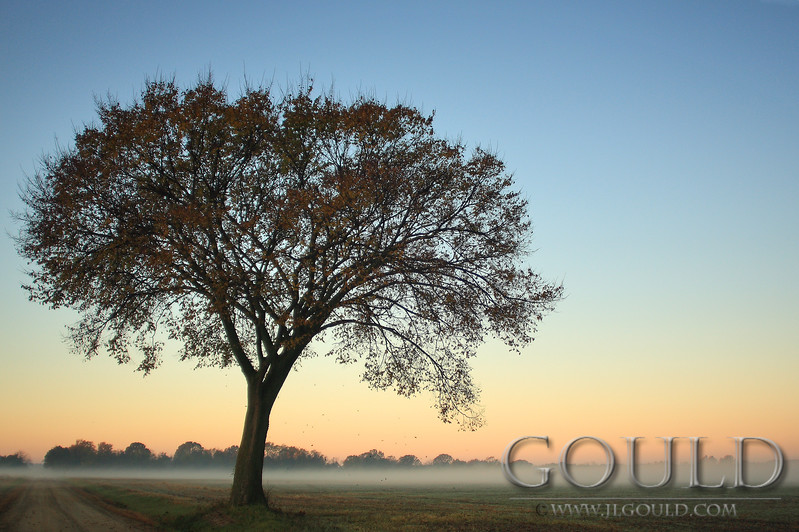 A Fall Tree In Wye Dawn