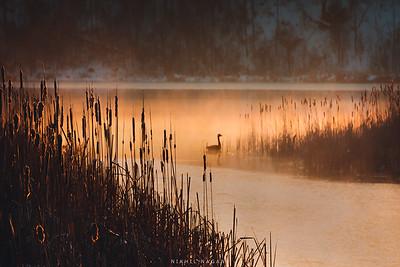 A foggy sunrise @iloveny @rochesterny @naturalnew_york @onlyin.newyork