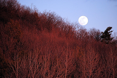 Full moon rises while the sun still lights up the trees - April 6, 2012