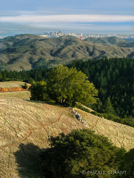 San Francisco from Mt Tamalpais
