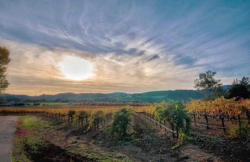 Winter Vineyards