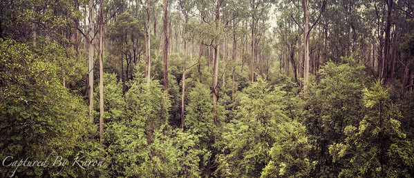 Treetop Views