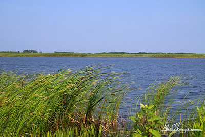 Back Bay Nature Preserve - Sandbridge, VA