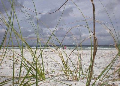Beach Grass - Seagrove Beach, FL
