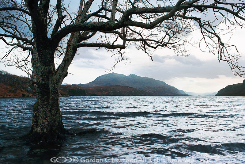Photo 8 The flooded tree at Loch Maree
