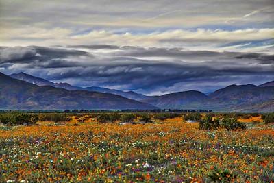 Anza-Borregeo Desert State Park