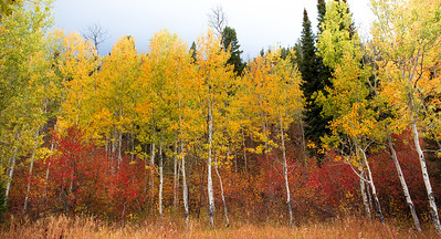 Grand Teton Autumn Meadow
