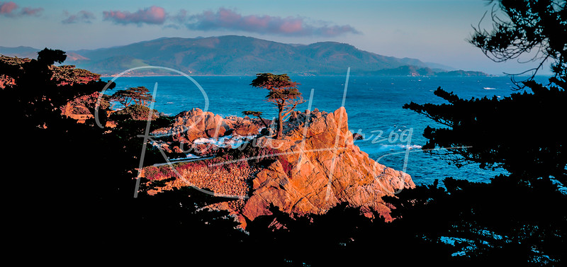 The Lone Cypress on 17 Mile Drive