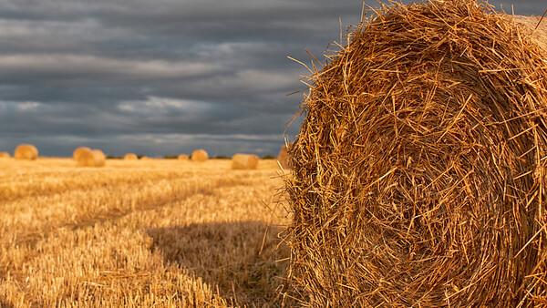 Racks of Hay Shielhill Farm Aberdeen
