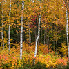 Fall foliage near Greenville, Maine.