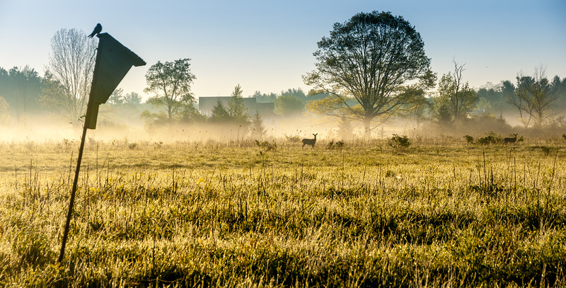 Morning Mist with Deer