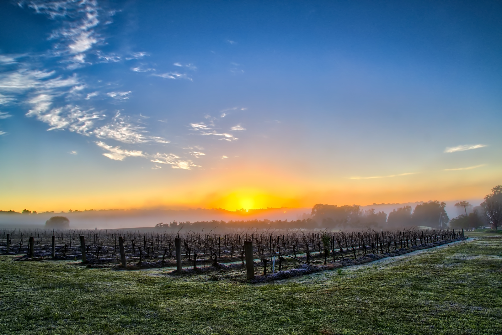 Vinyard Sunrise