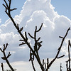 """Cactus against the Clouds"""