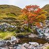 Photo 3313: Autumnal Solitude