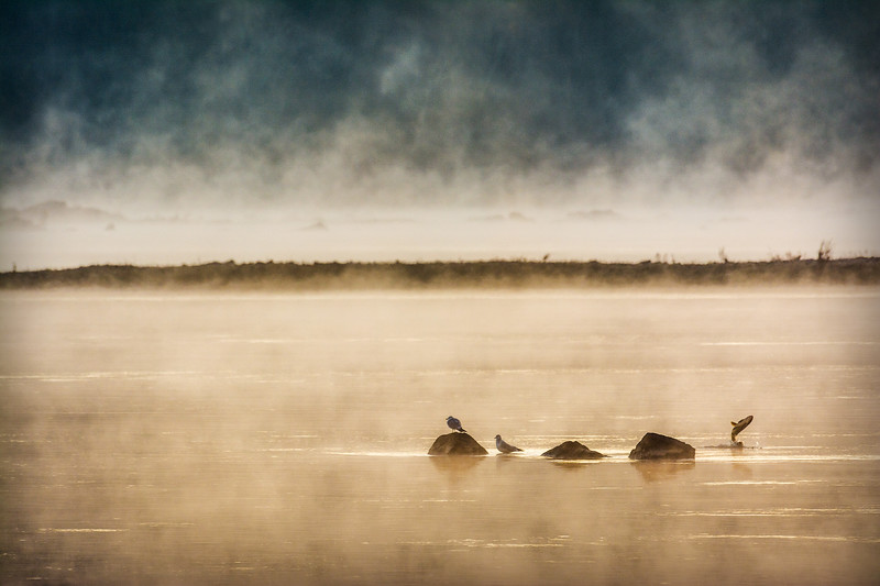 Morning Fog on the Susquehanna River