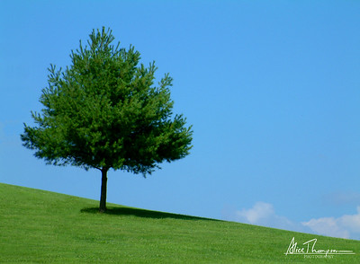 Solitary Tree - St. Meinrad Archabbey