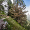 Hiking track to Makshpuri, Galiat