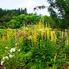 Garden at Crathes Castle. John Chapman.