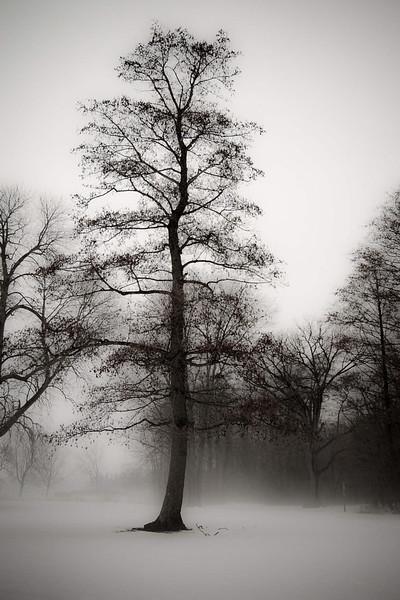 Tree Fog.