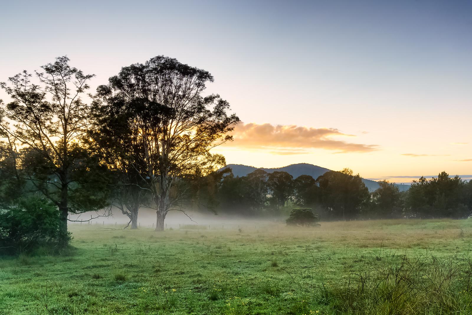 Foggy Field - Upper Hunter