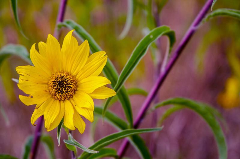 Single fall flower