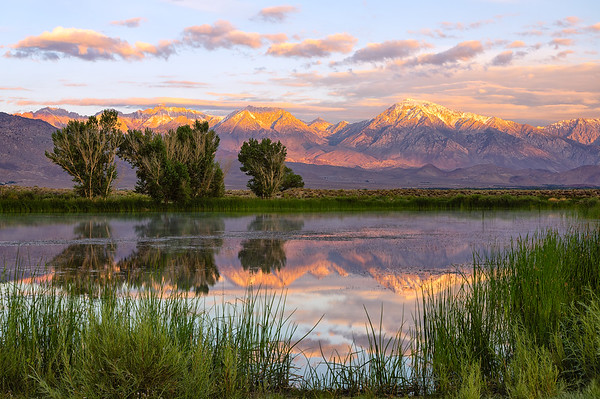 Summer Sunrise at Buckley Ponds