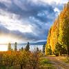 Sunset through the trees // Flathead Lake, MT