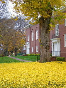 Yellow Tree - Louisville, KY