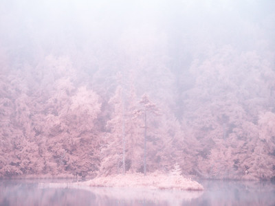 Pastel pink forests of the Adirondacks