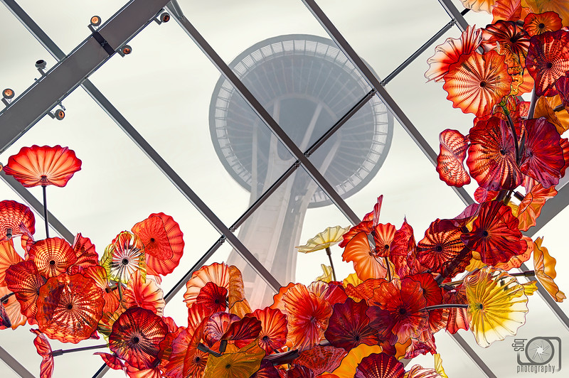 Seattle's Space flowers
