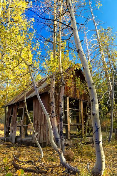Cabin in the Sierra Woods