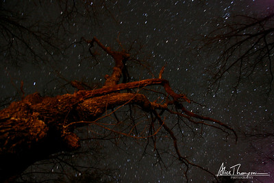Old Tree and Star Trails