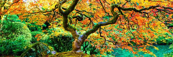 Autumn Zen