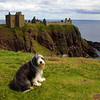 Buddy at Dunnottar Castle. John Chapman.