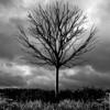 getty-tree