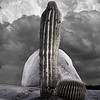 cactus-rock-