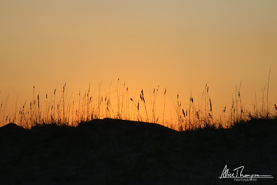 Sea Grass at Sunset - Wrightsville Beach, NC