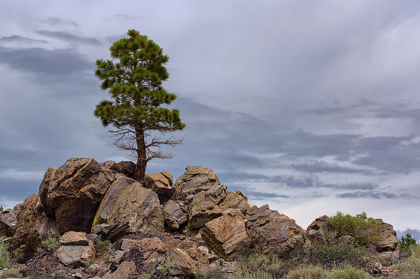 Lone Tree Under Overcast Skies
